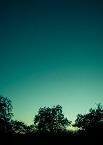 tree silhouette at dusk, teal, aqua