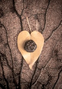photo of heart shaped leaf with a seed pod on it, simple, beauty, minimalist, love